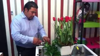 getlinkyoutube.com-Como hacer un arreglo floral www.digaloconrosas.com