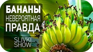 getlinkyoutube.com-Невероятная правда о бананах [SLIVKI SHOW]