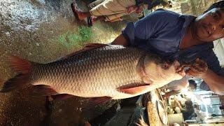 Incredible Fish Market & Big Catla Fish Slice Into Pieces
