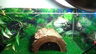 getlinkyoutube.com-Aquatic Turtles - Above Tank Basking Area
