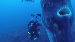 5 Deep Sea Creatures Faced By Divers! width=