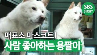 getlinkyoutube.com-매표소 지키는 개 용팔이(528회)_01