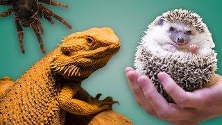 getlinkyoutube.com-Top 5 des animaux domestiques insolites, ne prends pas ça à la maison