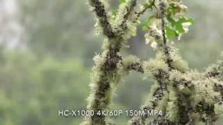 getlinkyoutube.com-Panasonic HC-X1000 Test Footage