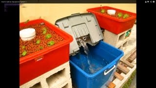 getlinkyoutube.com-Aquaponic System For Beginners (guide) 2014 . Home Aquaponic System on a Low Budget