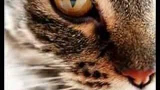 getlinkyoutube.com-Das Testament einer Katze