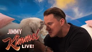 getlinkyoutube.com-Channing Tatum Says 8 Hateful Things to a Kitten