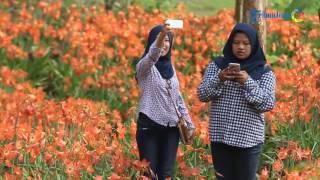 getlinkyoutube.com-Taman Bunga di Pathuk Gunung Kidul