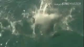 Midget falls into water SOUND effect