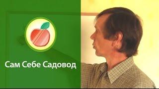 getlinkyoutube.com-О клоновых подвоях и саженцах со вставкой
