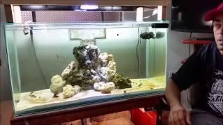 getlinkyoutube.com-É possível ter um aquário marinho gastando pouco???