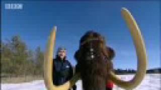 getlinkyoutube.com-Evolution of the woolly mammoth - BBC science