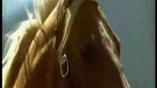 getlinkyoutube.com-The Horse Whisperer - Video&Music