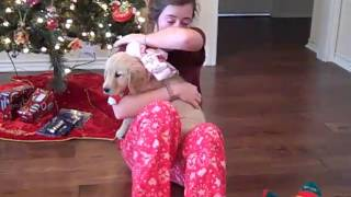 getlinkyoutube.com-McKenna's Christmas Puppy Surprise