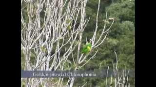 Birds & More: Costa Rica
