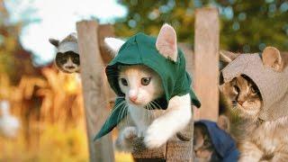 Assassin's Kittens! width=