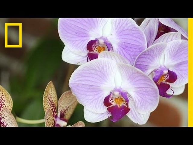Replacing Florida's Stolen Orchids