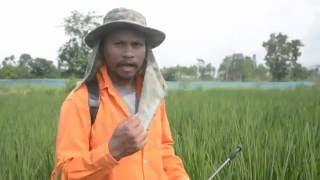 getlinkyoutube.com-เกษตรทฤษฎีใหม่ ทำนา 1 ไร่ ได้เงิน 1 แสน (ตอนที่1) โดย สังข์ ละหานทราย