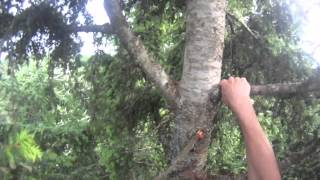 World Record Unassisted Tree Climb
