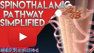 Spinothalamic Tract Made Easy - Spinal Cord Tracts 1