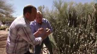 getlinkyoutube.com-Arizona Cactus Farm - America's Heartland