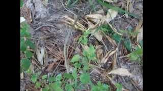 getlinkyoutube.com-เข้าป่าหากินกับธรรมชาติ