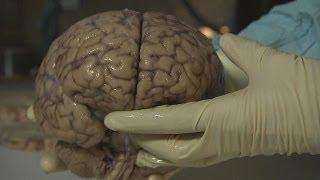 آخرین پژوهشها درباره حیرت آورترین اسرار مغز - futuris