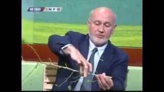 getlinkyoutube.com-Saveti Dr Velickovica - zelena rezidba i savijanje grana neophodni