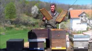 getlinkyoutube.com-Priprema pčelinjih zajednica za bagremovu pašu