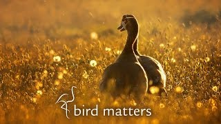getlinkyoutube.com-Beautiful Photography of Garden Birds: Bird Matters
