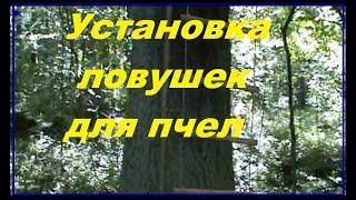 getlinkyoutube.com-Установка ловушек для роев
