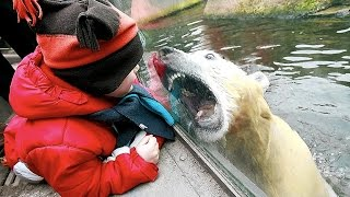 getlinkyoutube.com-Zoo Animal Attacks ★ When Dangerous Animals Don't Know What Glass Is! [Funny Pets]