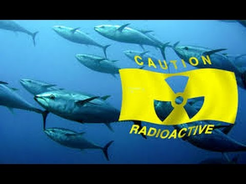HIGHLY Radioactive FISH Found & Fukushima Update 2/28/13