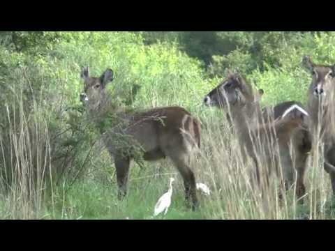 Birding Gauteng South Africa