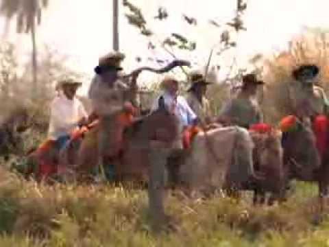 Boiada no Estradão - Reportagem Globo Rural, Sobre a Tradição das Comitivas do MS