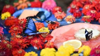 getlinkyoutube.com-Dubai Butterfly Garden