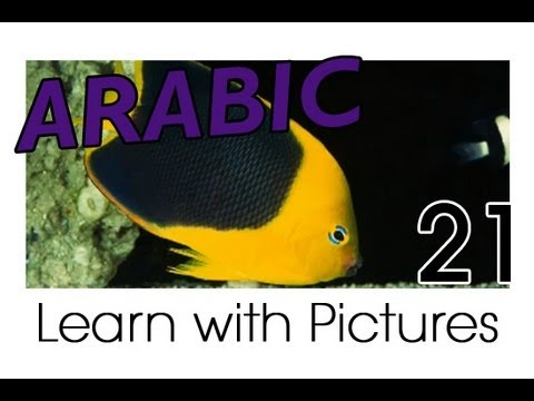 Learn Arabic - Arabic Marine Animals Vocabulary