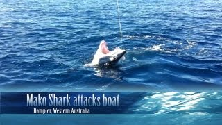 getlinkyoutube.com-Mako Shark attacks boat.mp4