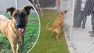 getlinkyoutube.com-Owner reunited with dog at shelter abandons him again; Wrongly jailed Man gets 60 grand - 01/12/2016