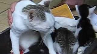 getlinkyoutube.com-Gặp lại mèo vỡ bụng ngày ấy.