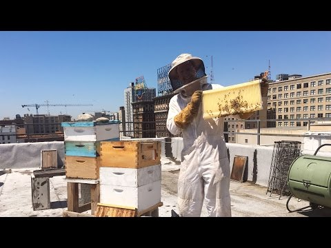 How The Walking Dead star Corey Brill keeps bees on his roof top in downtown LA (video)