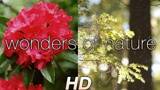 "getlinkyoutube.com-""Wonders of Nature"" 1HR Relaxation Video with Music 1080p HD ft Darshan Ambient"