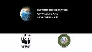 wwf anti poaching tv ad march 2014