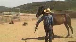 getlinkyoutube.com-pepper the aggressive horse part one