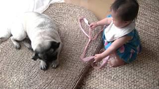 getlinkyoutube.com-パグと赤ちゃん