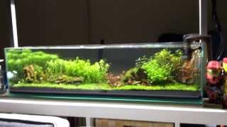getlinkyoutube.com-Mr Aqua 12g long aquarium