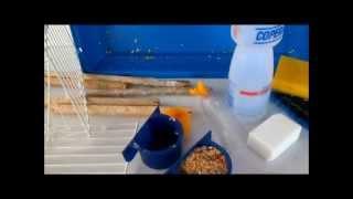 getlinkyoutube.com-Tudo Sobre Periquitos Australianos-como limpar a gaiola adequadamente