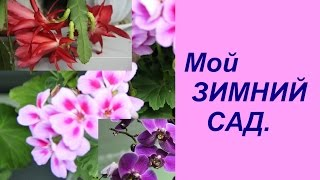 Экскурсия по дому. Мой зимний сад. | Indoor Plants.