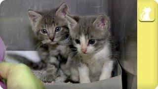 getlinkyoutube.com-Unweaned Kittens Need Foster - Unadoptables