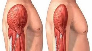 getlinkyoutube.com-كيف تسرع من عملية بناء العضلات